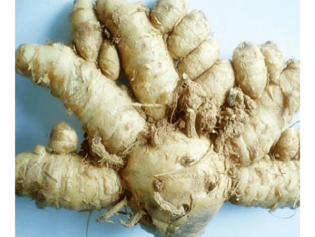 home-remedies-to-tighten-vaginal-walls-curcuma comosa
